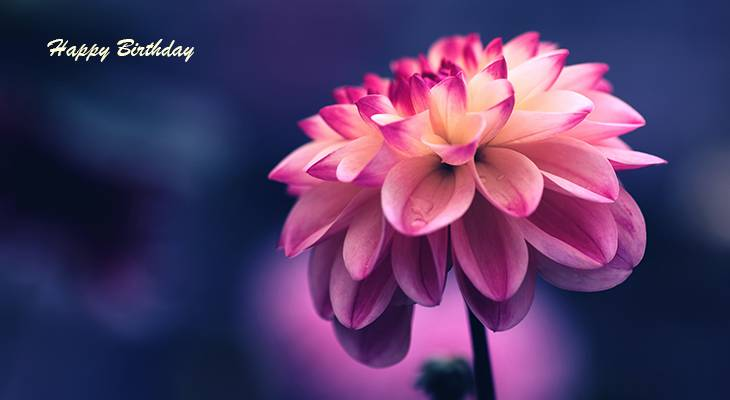 happy birthday wishes, birthday cards, birthday card pictures, famous birthdays, pink flower, dahlia