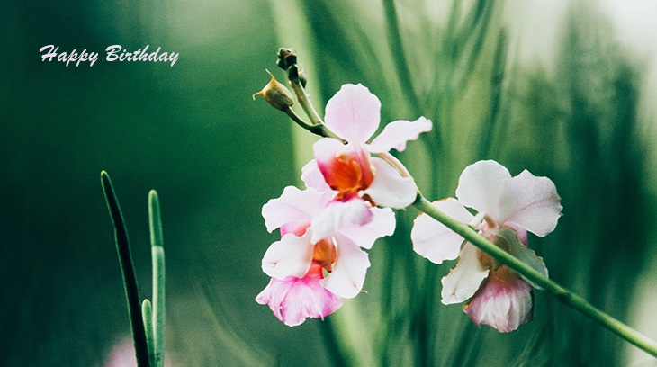 happy birthday wishes, birthday cards, birthday card pictures, famous birthdays, pink and white flowers, pink orchid