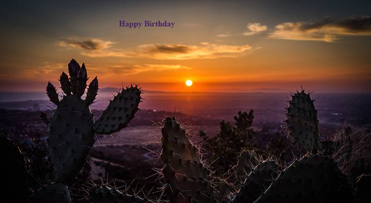happy birthday wishes, birthday cards, birthday card pictures, famous birthdays, cactus, sunset, newport beach, nature
