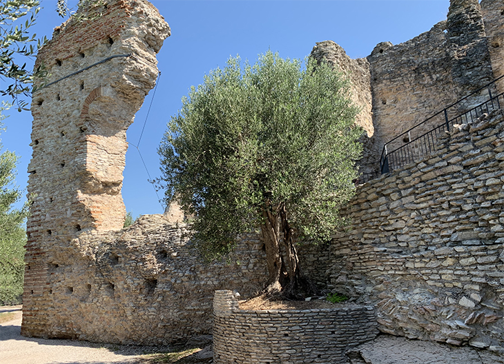 grottoes of catullus, grotte di catullo, grande pilon, lake garda, early roman ruins, olive trees, sirmione archaeological site, northern italy, travel to italy,
