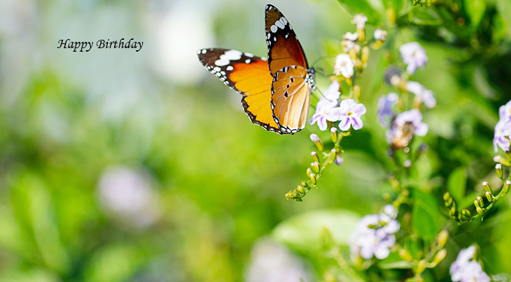 happy birthday wishes, birthday cards, birthday card pictures, famous birthdays, orange, butterfly, flowers, nature