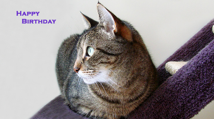happy birthday wishes, birthday cards, birthday card pictures, famous birthdays, cat, animal, pet