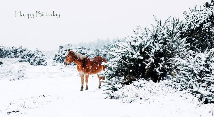 happy birthday wishes, birthday cards, birthday card pictures, famous birthdays, horse, winter, snow, animal