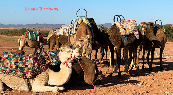 happy birthday wishes, birthday cards, birthday card pictures, famous birthdays, camels, animals, desert, morocco, marrakech
