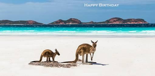 happy birthday wishes, birthday cards, birthday card pictures, famous birthdays, kangaroos, mother, baby annimal, beach, australia, lucky bay