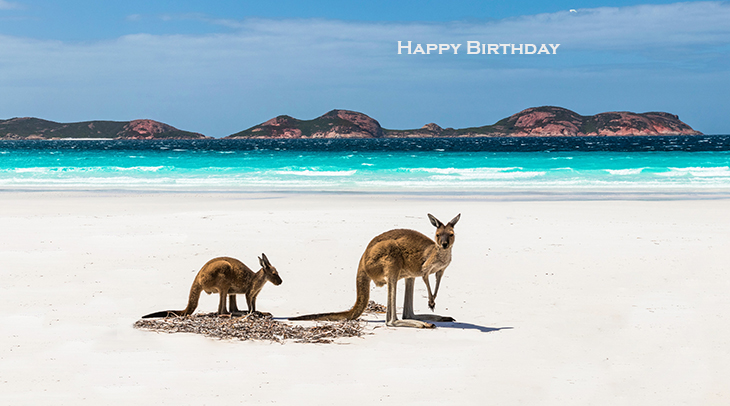 happy birthday wishes, birthday cards, birthday card pictures, famous birthdays, kangaroos, mother, baby annimal, beach, australia, lucky bay