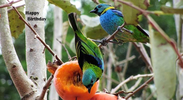 happy birthday wishes, birthday cards, birthday card pictures, famous birthdays, blue bird, green headed tanager, wild birds, brazil