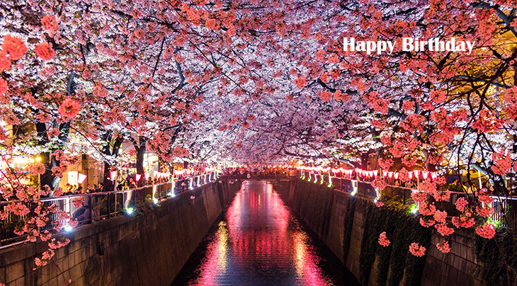 happy birthday wishes, birthday cards, birthday card pictures, famous birthdays, pink flowers, cherry blossoms, meguro river, matsuno, japan