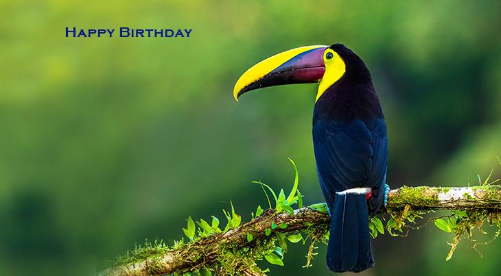 happy birthday wishes, birthday cards, birthday card pictures, famous birthdays, bird, toucan