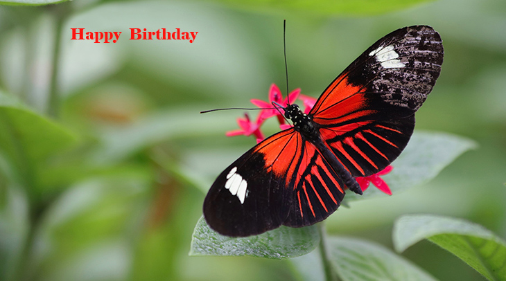happy birthday wishes, birthday cards, birthday card pictures, famous birthdays, butterfly, red, black, green