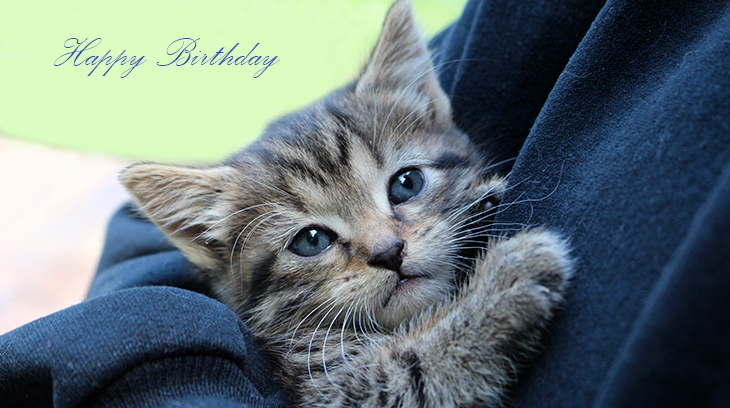 happy birthday wishes, birthday cards, birthday card pictures, famous birthdays, tabby, cat, kitten, baby animal