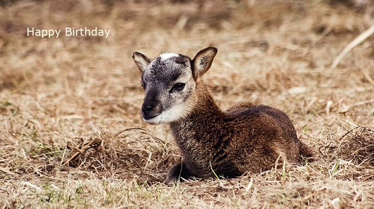 happy birthday wishes, birthday cards, birthday card pictures, famous birthdays, goat, baby, animals, kid