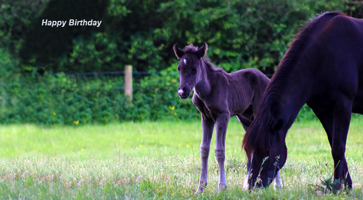 happy birthday wishes, birthday cards, birthday card pictures, famous birthdays, horses, baby animals, mother, mare, foal