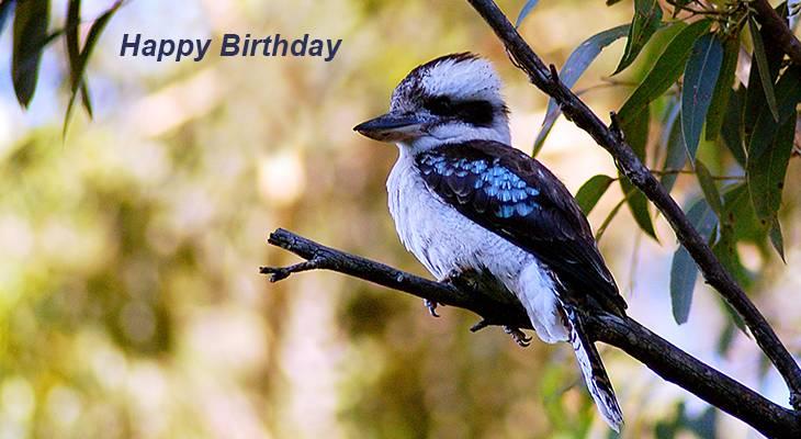 happy birthday wishes, birthday cards, birthday card pictures, famous birthdays, blue, bird, kookaburra, australia, new south wales, south west rocks
