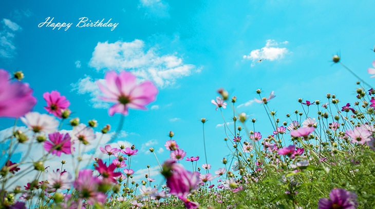 happy birthday wishes, birthday cards, birthday card pictures, famous birthdays, pink flowers, wild flowers, blue sky