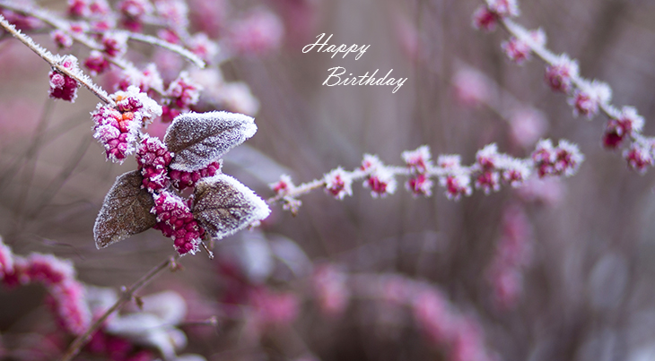 happy birthday wishes, birthday cards, birthday card pictures, famous birthdays, pink flowers, red berries, frost,