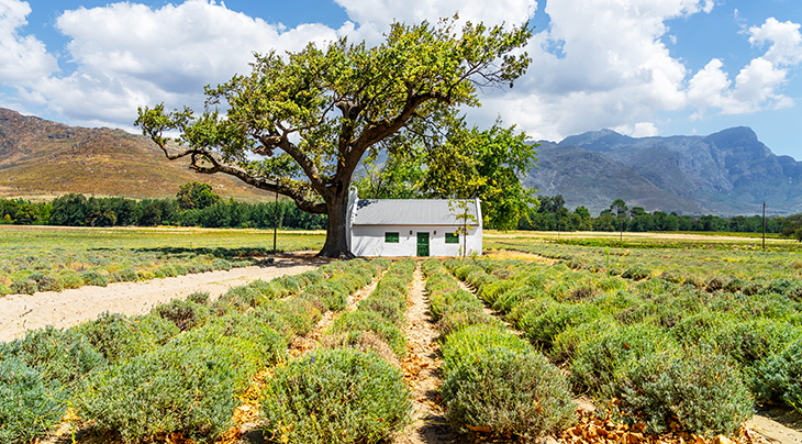 top wine regions, franschhoek, south africa, wineries, vineyards, grapes, travel, wine tours, nature scenery