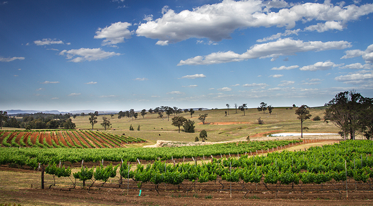 top wine regions, wines, red, white, grapes, hunter valley, new south wales, australia, wineries, vineyards, travel, wine tours, wine tasting