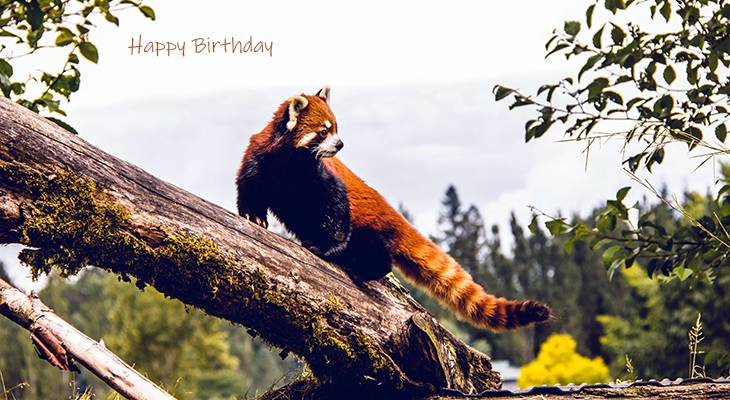 happy birthday wishes, birthday cards, birthday card pictures, famous birthdays, red panda, wild animals