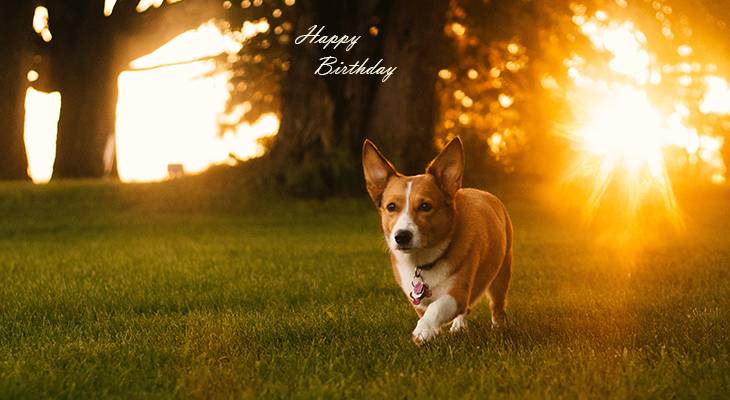 happy birthday wishes, birthday cards, birthday card pictures, famous birthdays, puppy, dog, sunset, pembroke welsh corgi