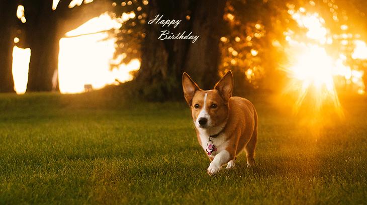 happy birthday wishes, birthday cards, birthday card pictures, famous birthdays, puppy, dog, sunset, pembroke welsh corgi