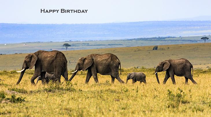 happy birthday wishes, birthday cards, birthday card pictures, famous birthdays, elephants, baby animals, family, kenya