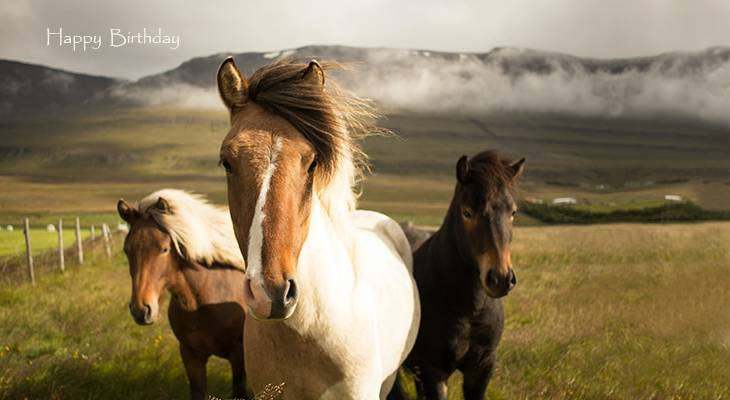 happy birthday wishes, birthday cards, birthday card pictures, famous birthdays, icelandic ponies, horses, wild