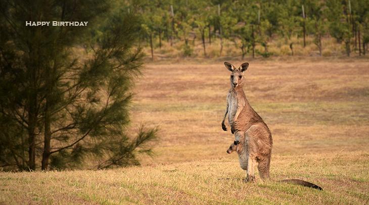 happy birthday wishes, birthday cards, birthday card pictures, famous birthdays, kangaroos, baby animals, joey, wild animal, australia