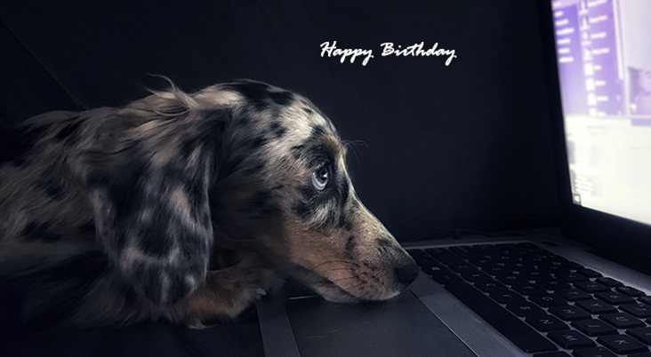 happy birthday wishes, birthday cards, birthday card pictures, famous birthdays, dachshund puppy, baby animals, dog