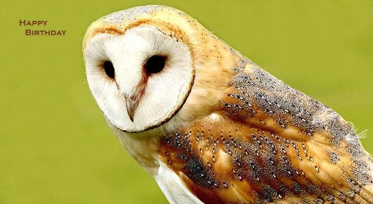 happy birthday wishes, birthday cards, birthday card pictures, famous birthdays, barn owl, wild birds
