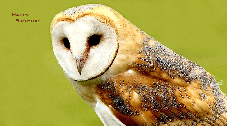 happy birthday wishes, birthday cards, birthday card pictures, famous birthdays, barn owl, wild birds