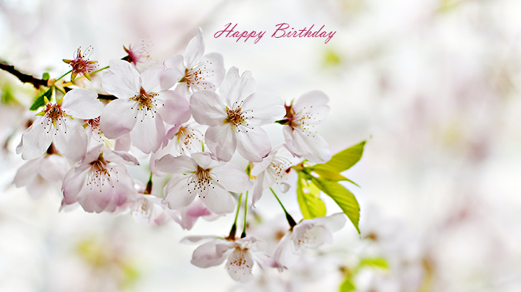 happy birthday wishes, birthday cards, birthday card pictures, famous birthdays, apple blossoms, white flowers