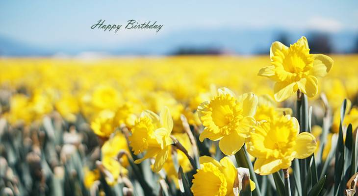 happy birthday wishes, birthday cards, birthday card pictures, famous birthdays, yellow flowers, daffodils, spring bulbs