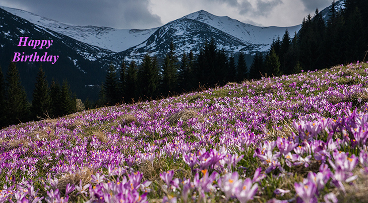 happy birthday wishes, birthday cards, birthday card pictures, famous birthdays, pink flowers, crocus, mountains