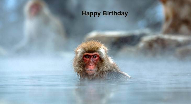 happy birthday wishes, birthday cards, birthday card pictures, famous birthdays, baboon, monkey, primate, wild animal