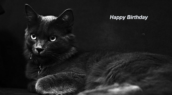 happy birthday wishes, birthday cards, birthday card pictures, famous birthdays, black cat, kitten, animal