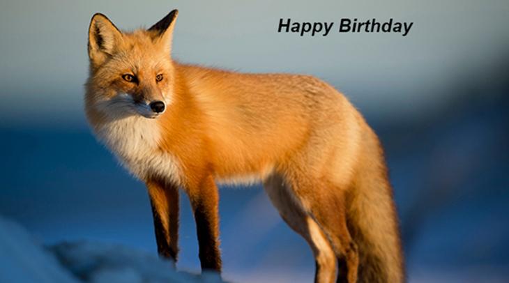happy birthday wishes, birthday cards, birthday card pictures, famous birthdays, red fox, wild animal, winter