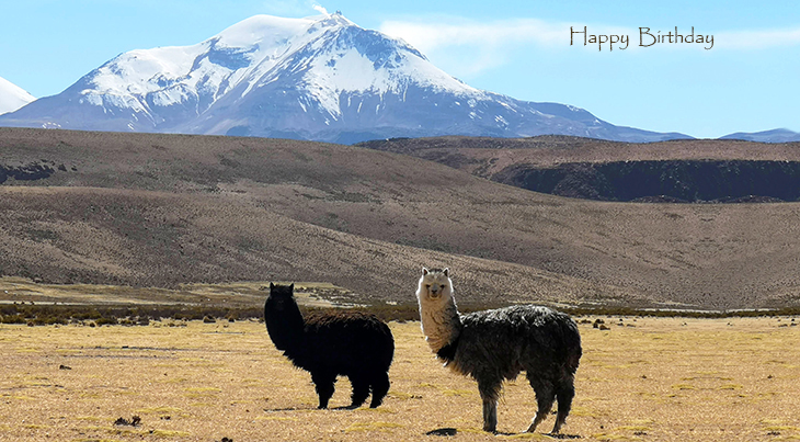 happy birthday wishes, birthday cards, birthday card pictures, famous birthdays, alpacas, animals, chile, mountains, putre
