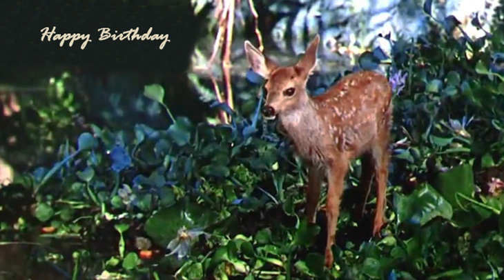 happy birthday wishes, birthday cards, birthday card pictures, famous birthdays, baby deer, fawn, cute baby animal, wild animals