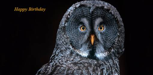 happy birthday wishes, birthday cards, birthday card pictures, famous birthdays, great grey owl, wild bird, germany birds