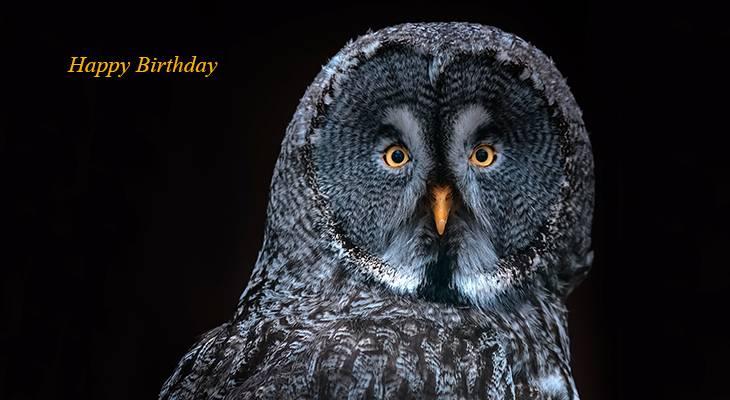 happy birthday wishes, birthday cards, birthday card pictures, famous birthdays, great grey owl, wild bird, germany birds
