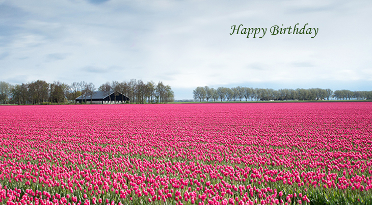 happy birthday wishes, birthday cards, birthday card pictures, famous birthdays, pink flowers, tulips, tulip fields