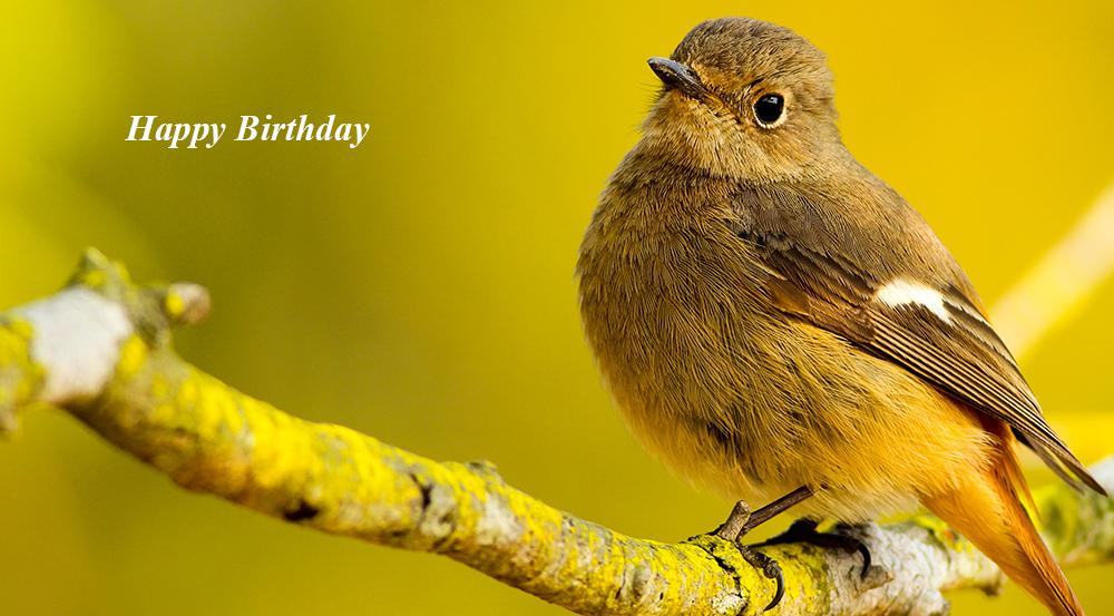 happy birthday wishes, birthday cards, birthday card pictures, famous birthdays, yellow bird, wild birds, nature