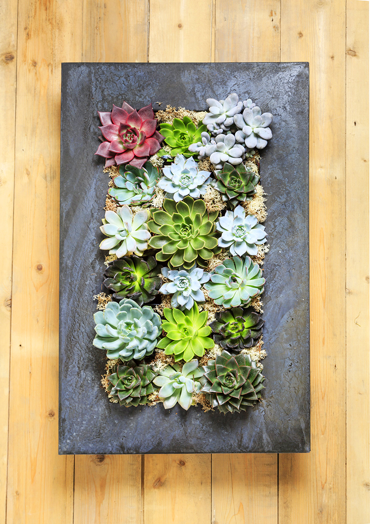 succulents, planter wall, greenery, potted plants, wall planters