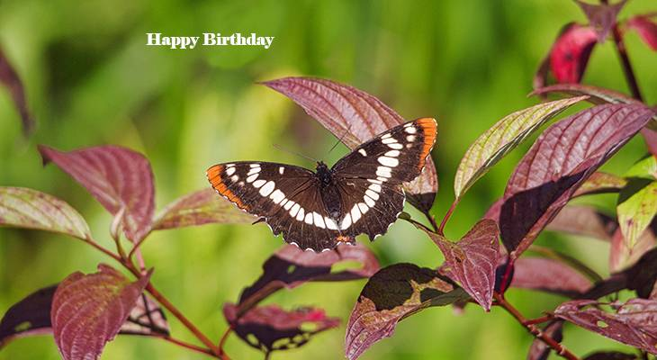 happy birthday wishes, birthday cards, birthday card pictures, famous birthdays, butterfly, purple leaves, moth
