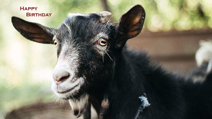 happy birthday wishes, birthday cards, birthday card pictures, famous birthdays, goat, animal