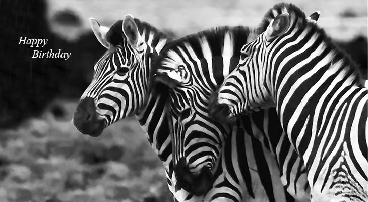 happy birthday wishes, birthday cards, birthday card pictures, famous birthdays, zebras, wild animals, south africa, elephant national park