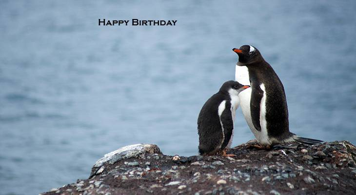happy birthday wishes, birthday cards, birthday card pictures, famous birthdays, penguins, wild birds, antarctica