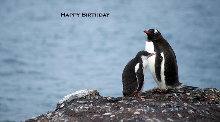 happy birthday wishes, birthday cards, birthday card pictures, famous birthdays, penguins, wild birds, antarctica