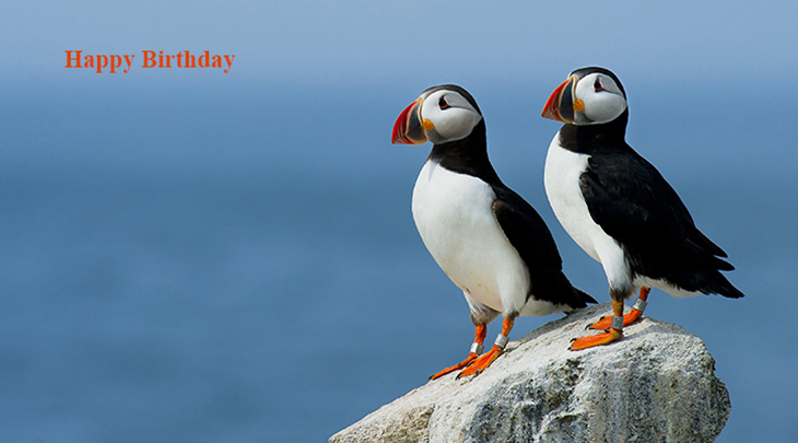happy birthday wishes, birthday cards, birthday card pictures, famous birthdays, wild birds, puffins, atlantic ocean
